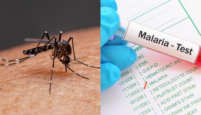 कोलकाता में डेंगू और मलेरिया ने मचाया हाहाकार, डॉक्टरों में बढ़ी चिंता
